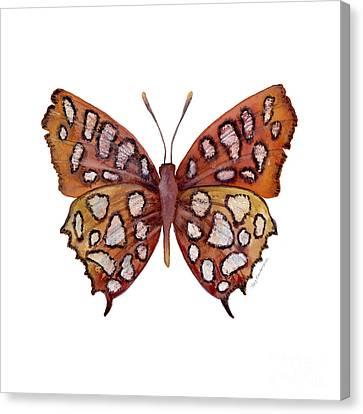 61 Hutchinson's Highflier Butterfly Canvas Print by Amy Kirkpatrick