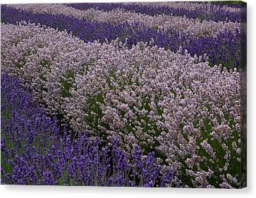 Perennial Canvas Print - North America, United States by John and Lisa Merrill