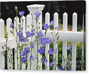 #665 11 Fenced In Canvas Print by Robin Lee Mccarthy Photography