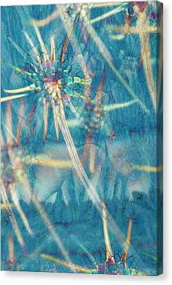 Abstract Polarised Light Micrograph Canvas Print by Steve Lowry