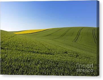 Agricultural Landscape. Auvergne. France. Canvas Print by Bernard Jaubert