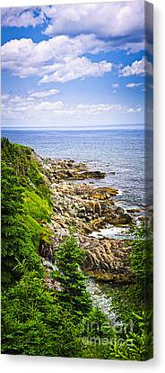 Atlantic Coast In Newfoundland Canvas Print by Elena Elisseeva