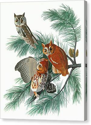 Audubon Owl Canvas Print by Granger