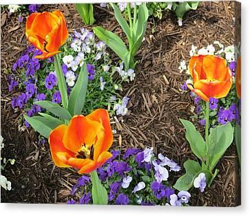 Williamsburg Canvas Print - Busch Gardens - 12127 by DC Photographer