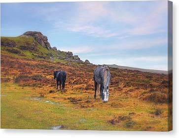 Dartmoor Canvas Print by Joana Kruse