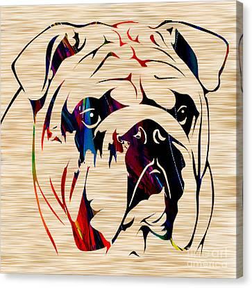 Bull Canvas Print - English Bulldog by Marvin Blaine