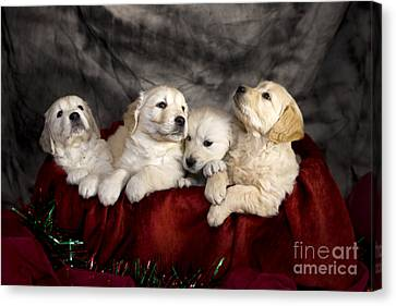 Festive Puppies Canvas Print by Angel  Tarantella