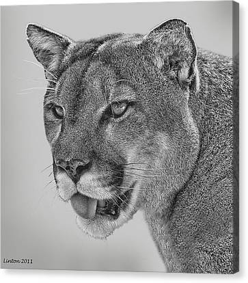 Florida Panther Canvas Print by Larry Linton