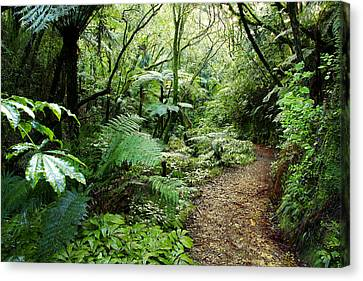 Forest Trail Canvas Print by Les Cunliffe