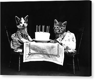 Frees Kittens, C1914 Canvas Print by Granger