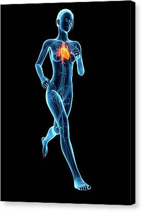 Heart Of A Runner Canvas Print by Sebastian Kaulitzki