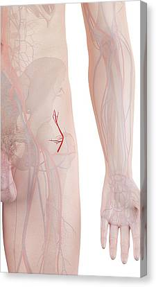 Human Artery Canvas Print by Sciepro