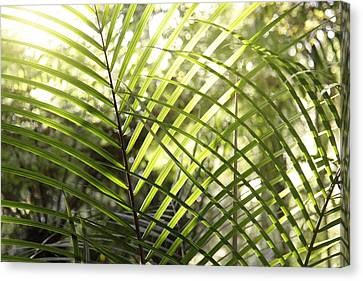 Leaves Canvas Print by Les Cunliffe