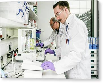 Malaria Drug Research Canvas Print by Gustoimages