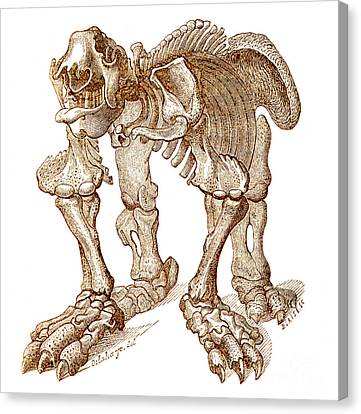 Sloth Canvas Print - Megatherium, Cenozoic Mammal by Science Source