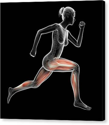 Muscular System Of Jogger Canvas Print