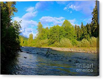 Salmon  Creek  Canvas Print by Tim Rice