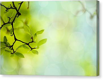 Bough Canvas Print - Spring Green by Nailia Schwarz