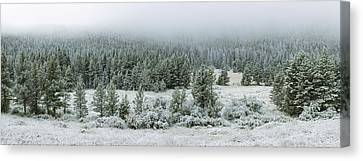 Trees On A Snow Covered Landscape Canvas Print