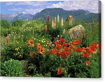 Usa, Colorado, Crested Butte Canvas Print