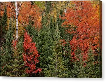 Usa, Michigan, Upper Peninsula Canvas Print by Jaynes Gallery