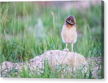 Usa, Wyoming, Sublette County Canvas Print