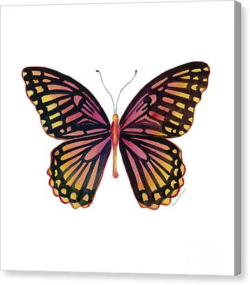70 Sunrise Mime Butterfly Canvas Print