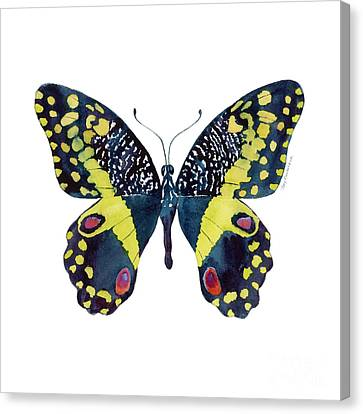 Black And Yellow Canvas Print - 73 Citrus Butterfly by Amy Kirkpatrick