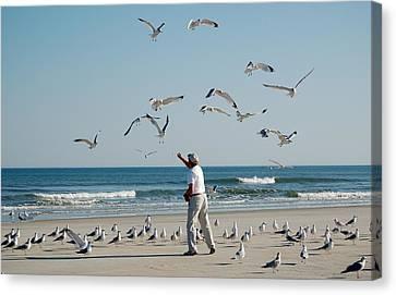 79 Seagulls Canvas Print by Linda Brown