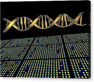 Dna Microarray And Double Helix Canvas Print by Pasieka