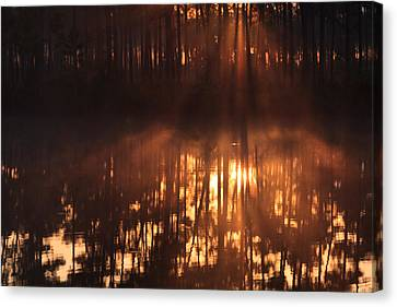 Everglades National Park Canvas Print - Foggy Sunrise At Long Pine Key by Jonathan Gewirtz