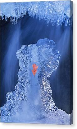 Frozen Beauty Aka Ice Is Nice IIi Canvas Print