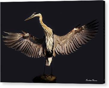 Great Blue Heron Canvas Print by Paulette Thomas