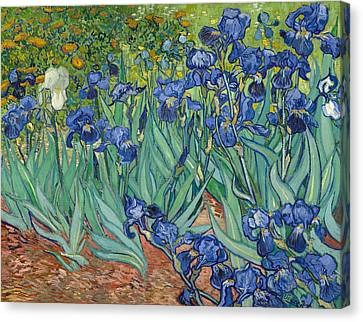 Getty Canvas Print - Irises by Vincent van Gogh