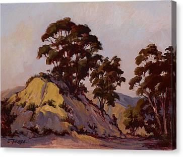 Ridge Eucalyptus Canvas Print by Jane Thorpe