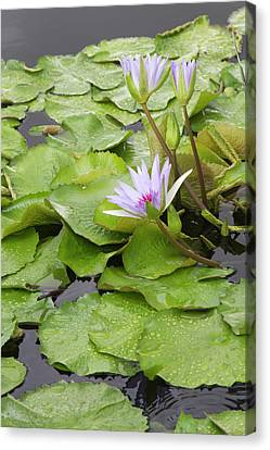 Jamie Canvas Print - La, New Orleans, New Orleans Botanical by Jamie and Judy Wild
