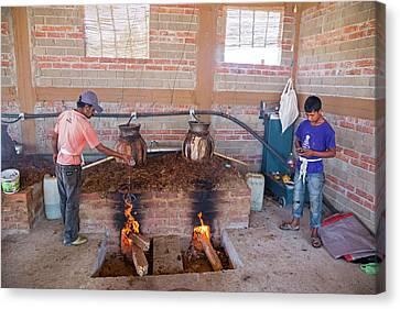 Mezcal Distillery Canvas Print