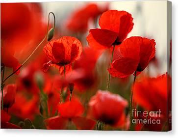 Flora Canvas Print - Poppy Dream by Nailia Schwarz
