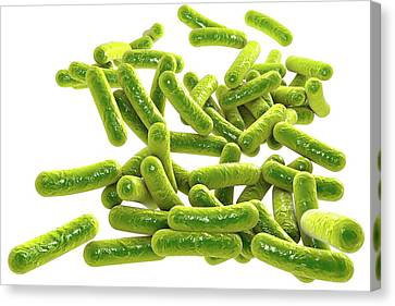 Rod-shaped Bacteria Canvas Print