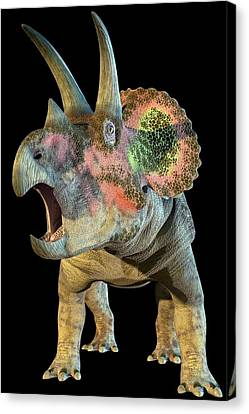 Triceratops Canvas Print - Triceratops Dinosaur by Roger Harris
