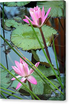 Pink Water Lily Pond Canvas Print by Irina Davis