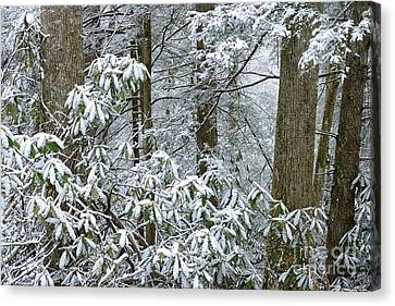 Winter Monongahela National Forest Canvas Print by Thomas R Fletcher