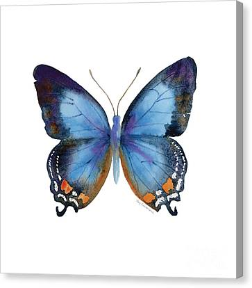 80 Imperial Blue Butterfly Canvas Print by Amy Kirkpatrick