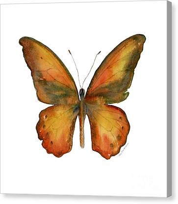 85 Lydius Butterfly Canvas Print by Amy Kirkpatrick
