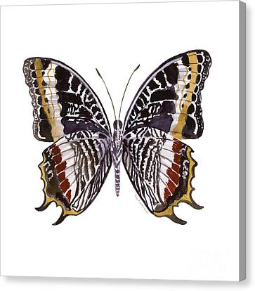 88 Castor Butterfly Canvas Print by Amy Kirkpatrick
