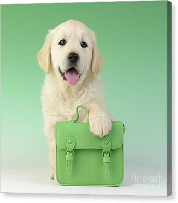 9 - 5 Retriever Dp914sq Canvas Print