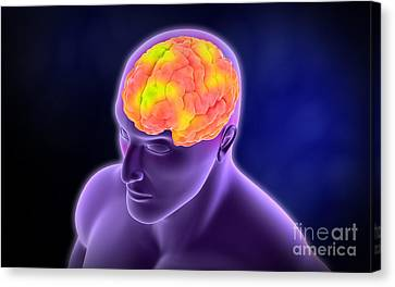 Conceptual Image Of Human Brain Canvas Print by Stocktrek Images
