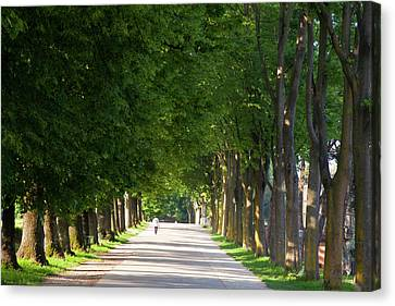 Europe, Italy, Lucca Canvas Print