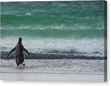 Falkland Islands Canvas Print by Inger Hogstrom