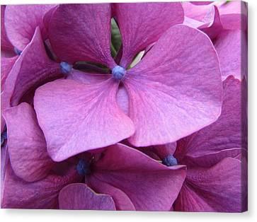 Flowers Canvas Print by Joyce Woodhouse